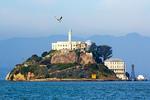 Gull and Alcatraz Island, Golden Gate National Recreation Area, San Francisco, California