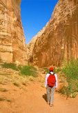 Hiker in Capitol Gorge, Capitol Reef National Park, Utah