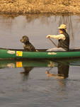 Man Canoeing with Pet Dog