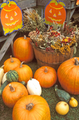 Pumpkins and Gourds, Autumn in New England