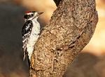 Cumberland Lady, Ferry Boat, Cumberland Island National Seashore, Georgia