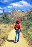 Hiker, Catalina State Park, Sonoran Desert, Tucson, Arizona