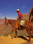 Wrangler on Mule, Bright Angel Trail, Grand Canyon National Park, Arizona