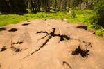 Top of Mark Twain Sequoia Tree Stump, Big Stump Trail, Kings Canyon National Park, California