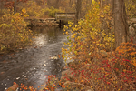 Wooden Footbridge and Creek, Autumn Foliage, Stonybrook Audubon Sanctuary, Norfolk, Massachusetts