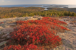 Autumn Foliage, Penobscot Mountain Summit, Atlantic Ocean, Rocky Maine Coast, Acadia National Park, Mount Desert Island, Maine