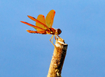 Entrance Sign, Hawaiʻi Volcanoes National Park, Hawaiian Islands, Big Island, Hawaii