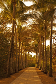 Palm Tree Lined Path, Bill Baggs State Park, Key Biscayne, Florida