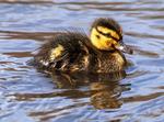 People Walking on Anhinga Trail Boardwalk, Taylor Slough, Everglades National Park, Florida