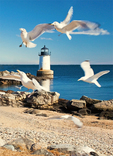 Fort Pickering Lighthouse and Gulls Flying, Winter Island Light, Salem, Massachusetts