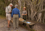 Ranger Talk, Anhinga Trail, Strangler Fig, Everglades National Park, Florida