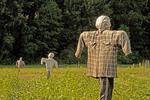 Scarecrows in Farm Field