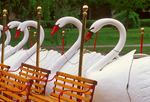 Swan Boats, Boston Public Garden, Boston, Massachusetts