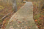 Wooden Boardwalk, Daniel Webster Wildlife Sanctuary, Mass Audubon, Marshfield, Massachusetts