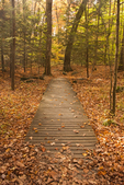 Wooden Boardwalk through Woods, Pleasant Valley Wildlife Sanctuary, Mass Audubon, Lenox, Massachusetts