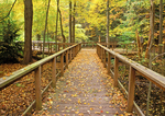Wooden Boardwalk through Woods, Arcadia Wildlife Sanctuary, Mass Audubon, Easthampton Massachusetts