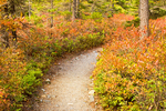Path Through Woods, Ship Harbor Nature Trail in Autumn, Acadia National Park, Mount Desert Island, Maine