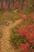 Path Through Woods, Wonderland Nature Trail, Acadia National Park, Mount Desert Island, Maine