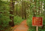 Trail in Woods, Rachel Carson National Wildlife Refuge, Wells, Maine