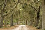 Live Oak Tree Lined Path, Cumberland Island National Seashore, Georgia