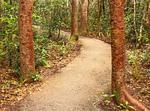 Gumbo Limbo Trail, Bursera simaruba, Everglades National Park, Florida
