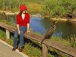 Woman Watching Cormorant, Anhinga Trail, Everglades National Park, Florida