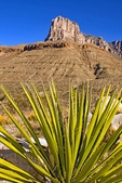 Yucca and El Capitan Rock Formation, Guadalupe Mountains National Park, Chihuahuan Desert, Texas