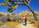 Hiker Framed by Joshua Tree, Joshua Tree National Park, Twentynine Palms, California