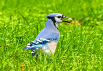 Grand Canyon Sunset from Bright Angel Point, Grand Canyon National Park, Arizona