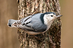 Colorado River and the Grand Canyon from Desert View, Grand Canyon National Park, Arizona