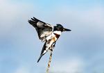 O'Neill Butte and Canyon, Grand Canyon National Park, Arizona