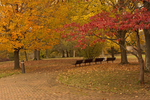 Autumn Foliage on Combs Hill, Monmouth Battlefield State Park, American Revolutionary War, Manalapan, New Jersey