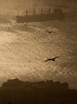 Gulls Flying and Barge, Algeciras Bay, Rock of Gibraltar, United Kingdom, Great Britain