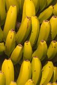 Canary Island Bananas, Island of Tenerife, Canary Islands, Spain