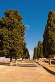 Ancient Roman Tree Lined Street, Hispania Baetica, Italica, 2nd Century Roman City, Santiponce, Sevilla, Seville, Andalucia, Spain
