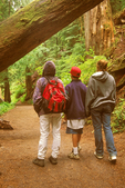 Family Hiking in the Grove of the Patriarchs, Mount Rainier National Park, Washington