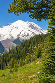 Mount Rainier from Silver Forest Trail, Sunshine Area, Mount Rainier National Park, Washington