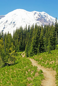 Mount Rainier and Silver Forest Trail, Sunshine Area, Mount Rainier National Park, Washington