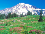 Mount Rainier from Skyline Trail, Paradise Meadows Area, Mount Rainier National Park, Washington