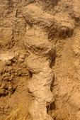 Daemonelix Fossil Burrow, Palaeocastor Fossil Burrow, Prehistoric Beaver Fossil Burrow, Agate Fossil Beds National Monument, Harrison, Nebraska