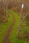 Calf Mountain Trail, Appalachian Trail, Blue Ridge Mountains, Shenandoah National Park, Virginia