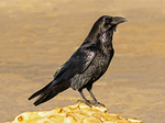 New London Ledge Light, Thames River, New London Harbor, Groton, Connecticut