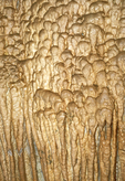 Flowstone Formation, Timpanogos Cave National Monument, Wasatch Mountains, American Fork Canyon, Utah