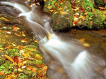 Cascade and Fallen Leaves, Abrams Creek, Cades Cove, Great Smoky Mountains National Park, Tennessee, North Carolina