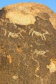 Signal Hill Hohokam Ancestral Puebloan Petroglyphs, Sonoran Desert, Saguaro National Park, Arizona