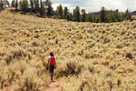 Hiker on Trail to Hellroaring Creek, Sagebrush Plateau, Yellowstone National Park, Wyoming