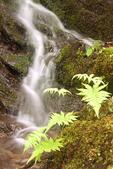 Rivulet at Wahconah Falls, Wahconah Falls Brook, Wahconah Falls State Park, Berkshires, Dalton, Massachusetts