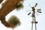 Windmill Framed by Joshua Tree, Wall Street Mill Trail, Joshua Tree National Park, Twentynine Palms, California