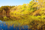 Freshwater Pond, Beech Forest Trail, Provincelands Area, Cape Cod National Seashore, Provincetown, Massachusetts