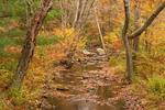East Brook, Laughing Brook Wildlife Sanctuary, Mass Audubon, Hampden, Massachusetts
